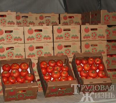 Наш  томат  вышел  на  федеральный  уровень