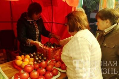 О наших томатах узнали в Москве