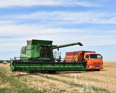 Как  жара  сказалась  на  урожае  зерновых?